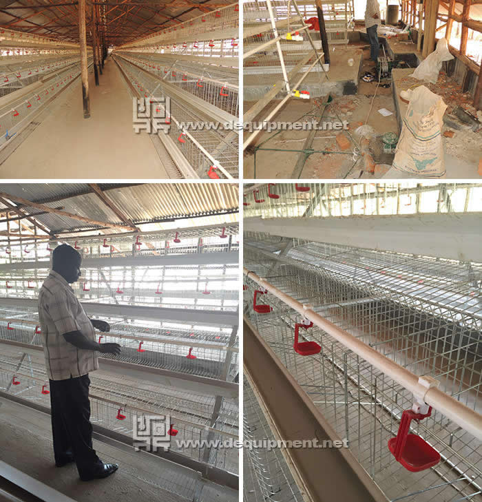African chicken farm project